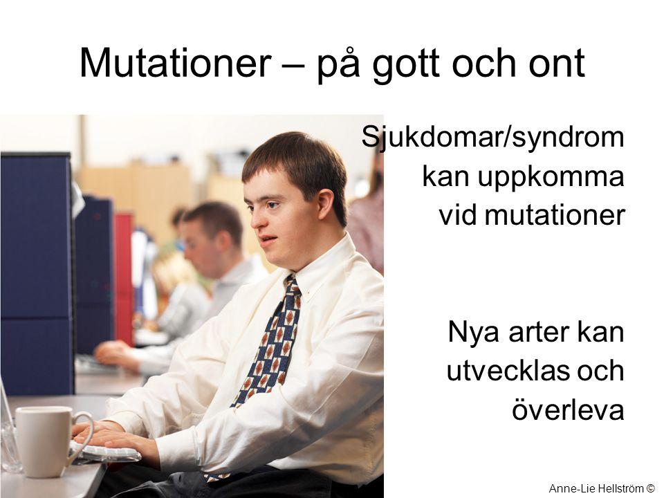Mutationer – på gott och ont Sjukdomar/syndrom kan uppkomma vid mutationer Nya arter kan utvecklas och överleva Anne-Lie Hellström ©