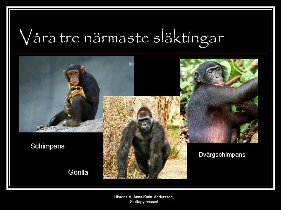 Historia A, Anna-Karin Andersson, Slottegymnasiet Viktiga stadier i vår utveckling ca 2,5 miljoner år sedan - Homo habils ca 1,8 miljoner år sedan – Homo erectus Omkring 2000 000 år sedan – Homo sapiens sapiens Vad skiljde människorna från aporna.