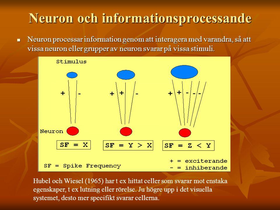 Neuron och informationsprocessande Neuron processar information genom att interagera med varandra, så att vissa neuron eller grupper av neuron svarar