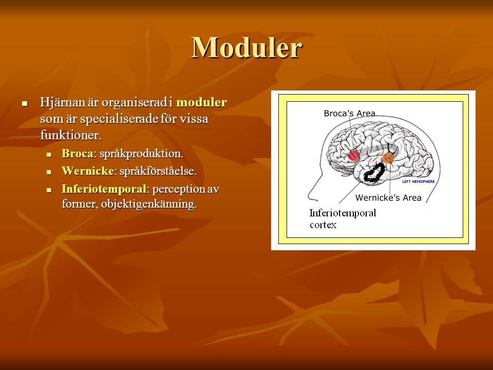Moduler Hjärnan är organiserad i moduler som är specialiserade för vissa funktioner. Hjärnan är organiserad i moduler som är specialiserade för vissa