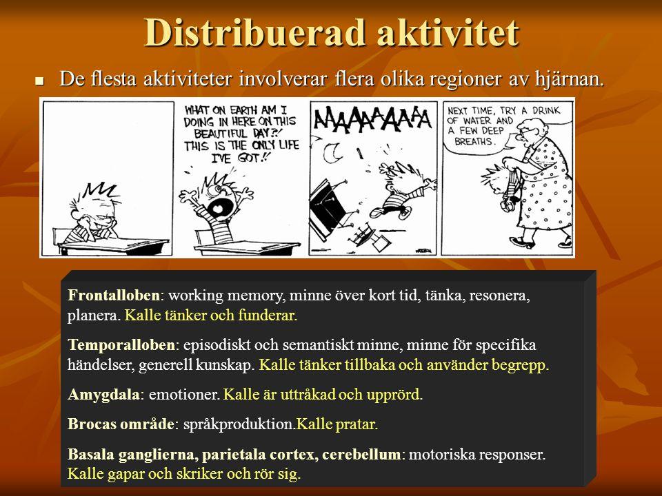 Distribuerad aktivitet De flesta aktiviteter involverar flera olika regioner av hjärnan. De flesta aktiviteter involverar flera olika regioner av hjär