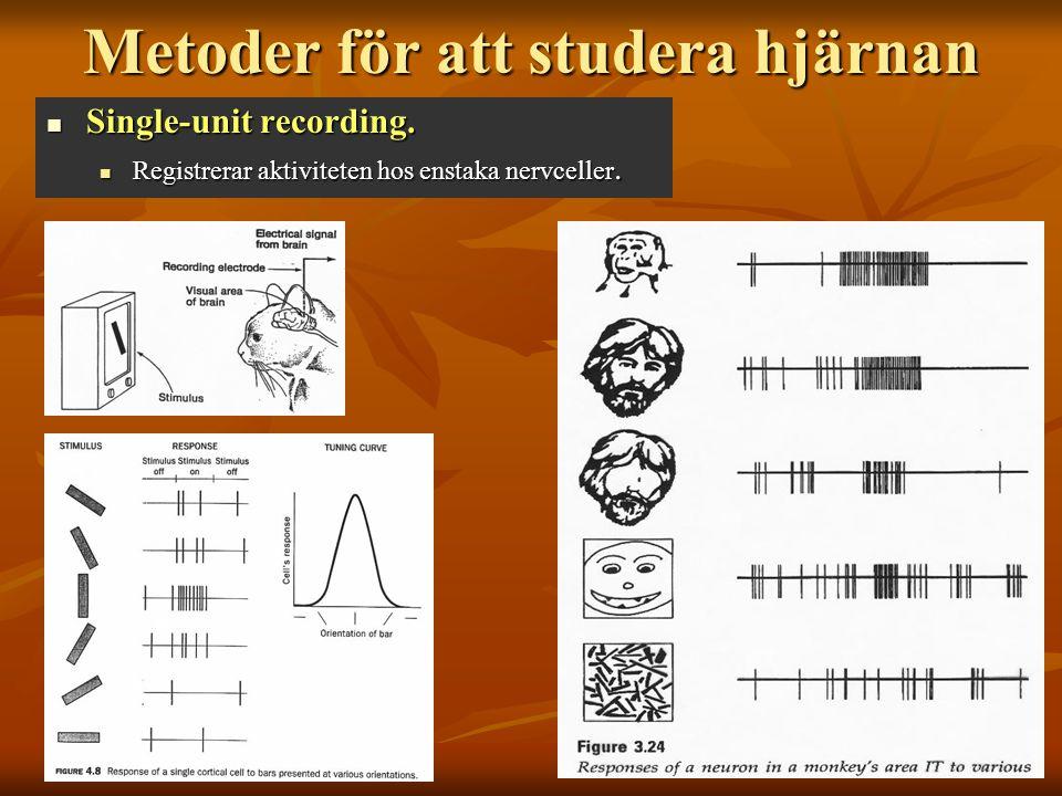 Metoder för att studera hjärnan Single-unit recording. Single-unit recording. Registrerar aktiviteten hos enstaka nervceller. Registrerar aktiviteten