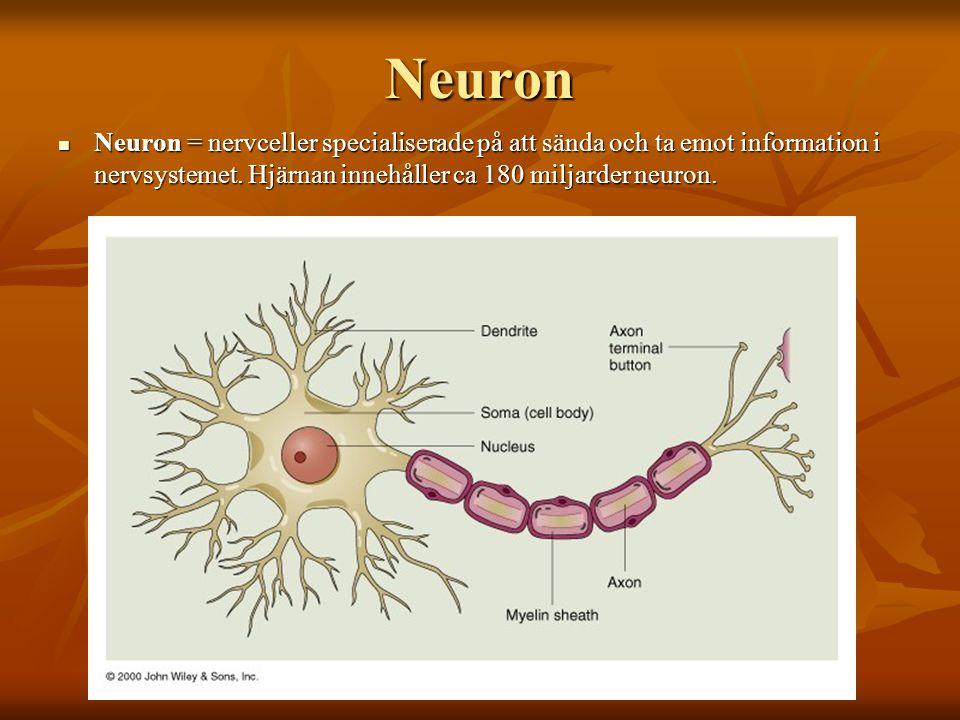 Neuron Neuron = nervceller specialiserade på att sända och ta emot information i nervsystemet. Hjärnan innehåller ca 180 miljarder neuron. Neuron = ne
