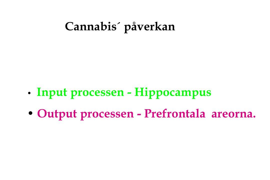 Cannabis´ påverkan Input processen - Hippocampus Output processen - Prefrontala areorna.