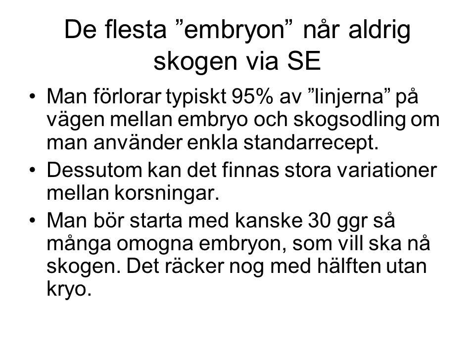"""De flesta """"embryon"""" når aldrig skogen via SE Man förlorar typiskt 95% av """"linjerna"""" på vägen mellan embryo och skogsodling om man använder enkla stand"""