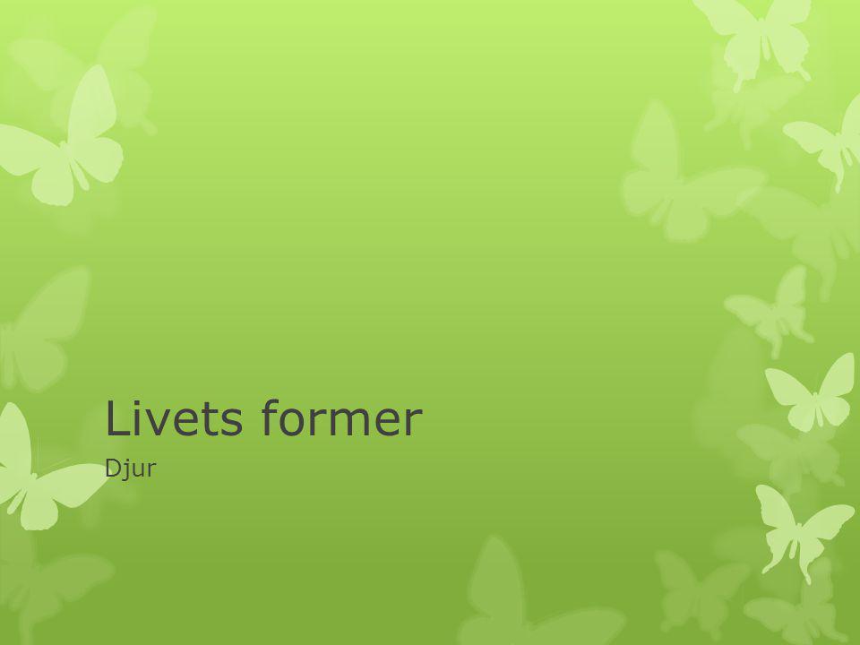 Livets former Djur