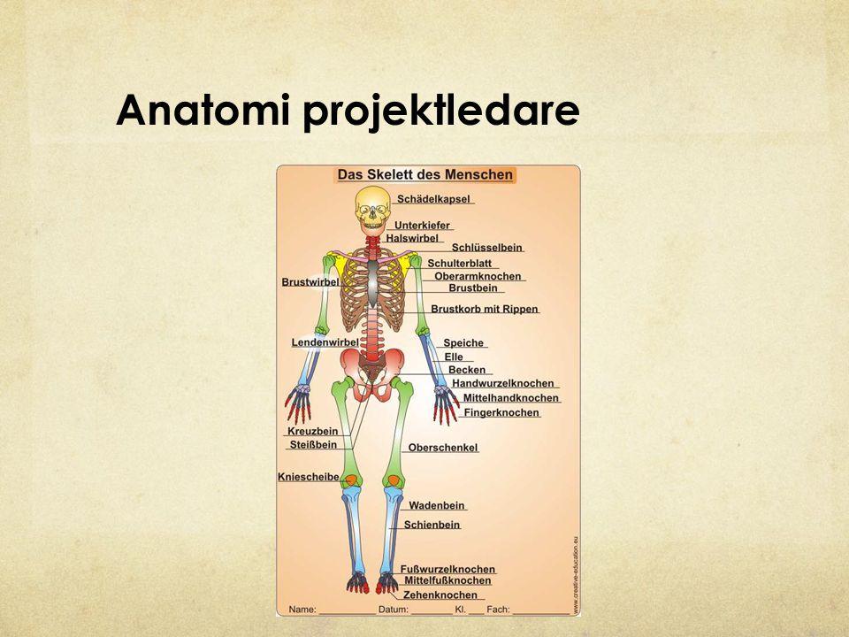 Anatomi projektledare