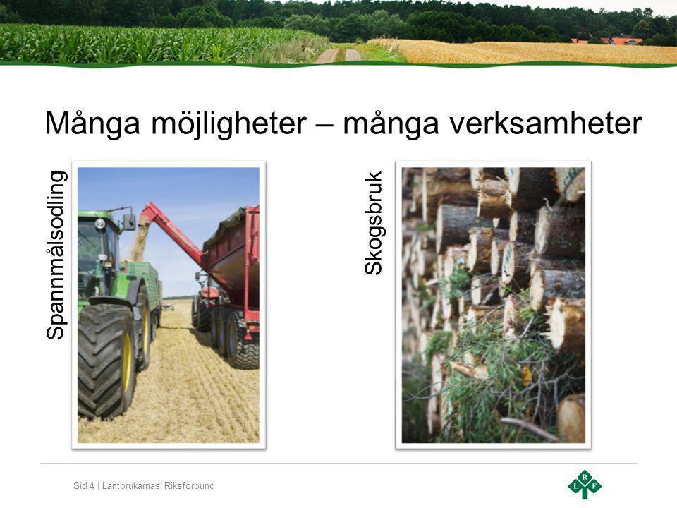 Sid 4 | Lantbrukarnas Riksförbund Många möjligheter – många verksamheter Spannmålsodling Skogsbruk