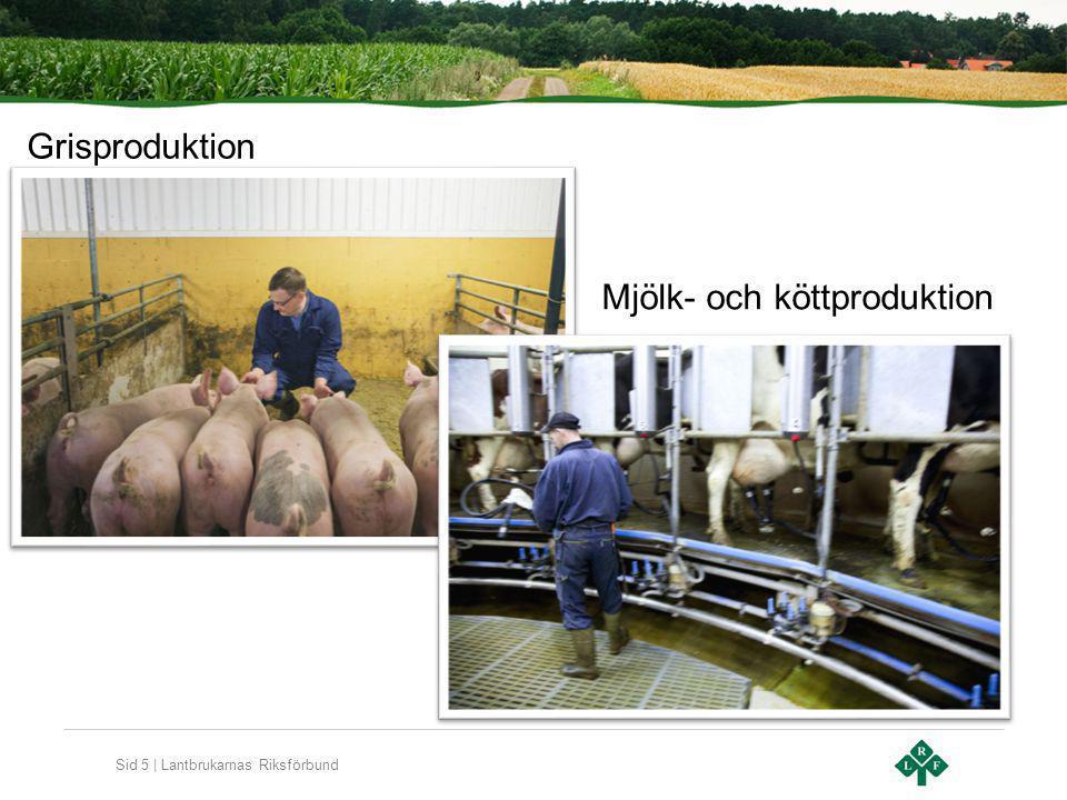 Sid 5 | Lantbrukarnas Riksförbund Grisproduktion Mjölk- och köttproduktion