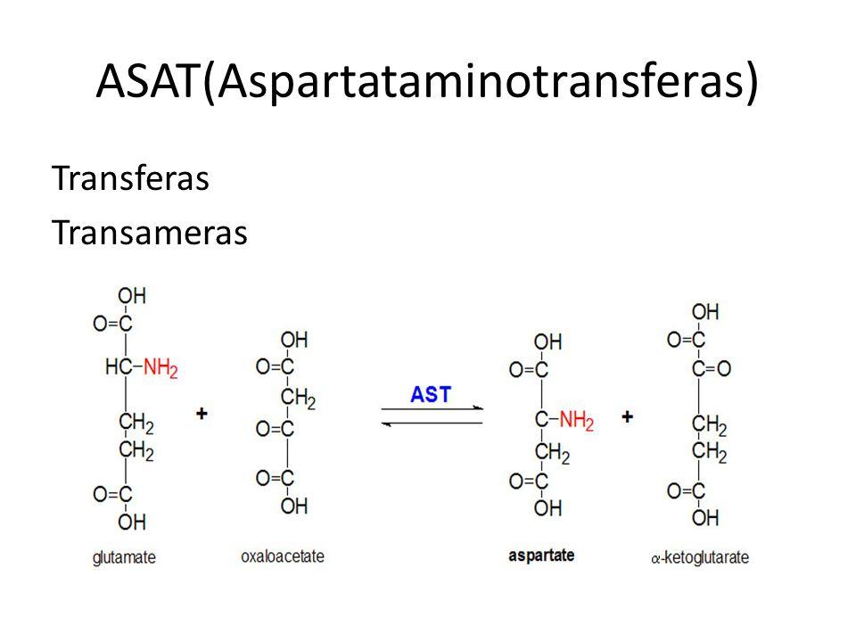 ASAT(Aspartataminotransferas) Transferas Transameras