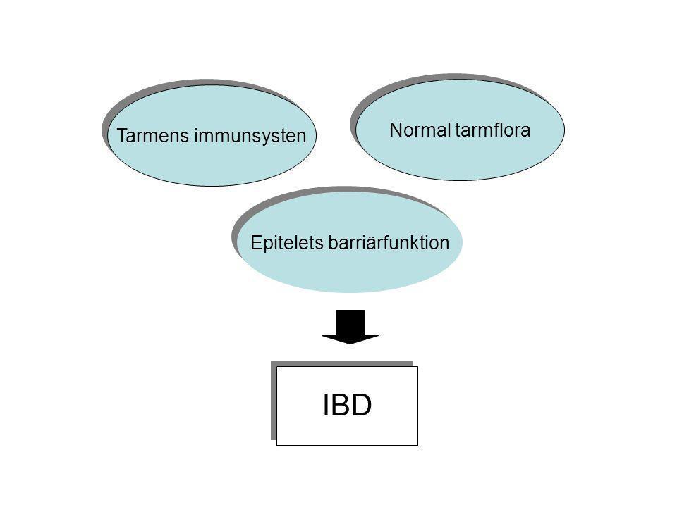 Tarmens immunsysten Normal tarmflora Epitelets barriärfunktion IBD