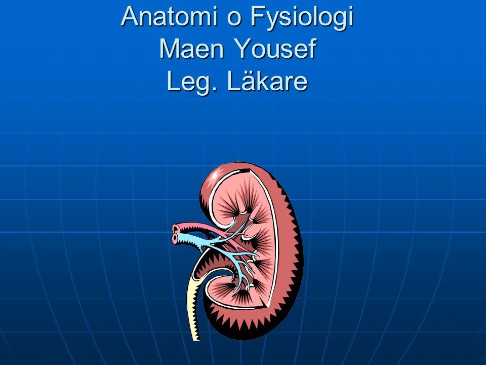 Anatomi o Fysiologi Maen Yousef Leg. Läkare