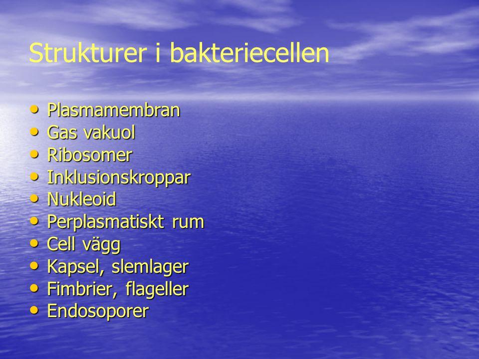 Plasmamembranet www.ehinger.nu/undervisning/mikrobiologi/lekt...