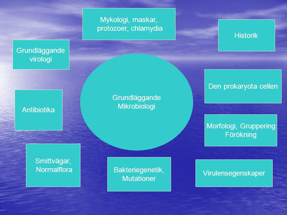 Grundläggande Mikrobiologi Historik Den prokaryota cellen Virulensegenskaper Morfologi, Gruppering Förökning Bakteriegenetik, Mutationer Smittvägar, Normalflora Grundläggande virologi Antibiotika Mykologi, maskar, protozoer, chlamydia