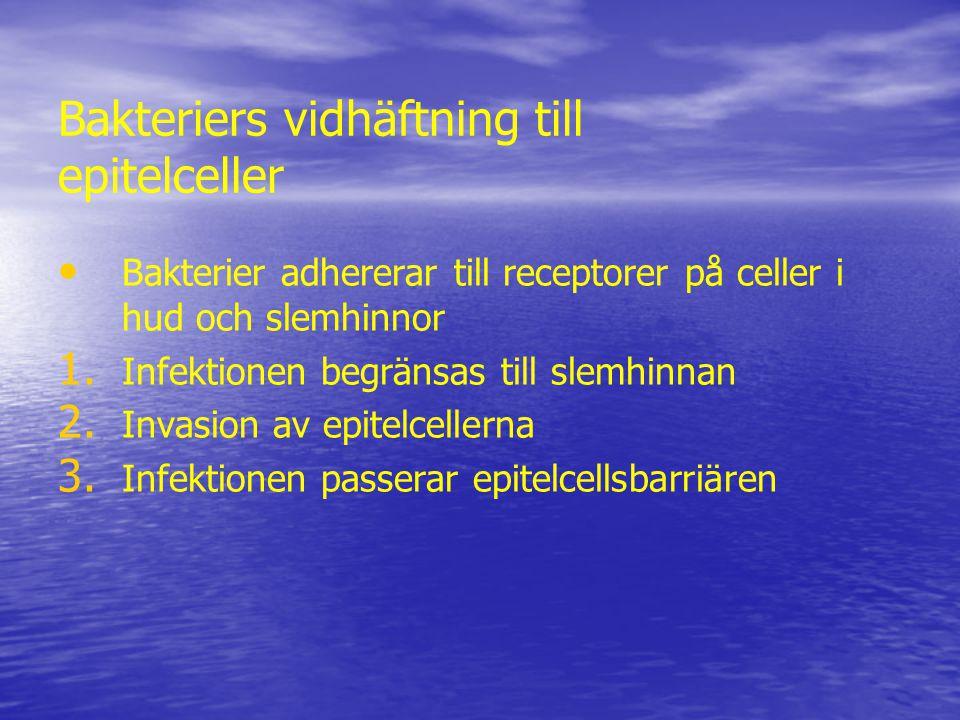 Bakteriers vidhäftning till epitelceller Bakterier adhererar till receptorer på celler i hud och slemhinnor 1.