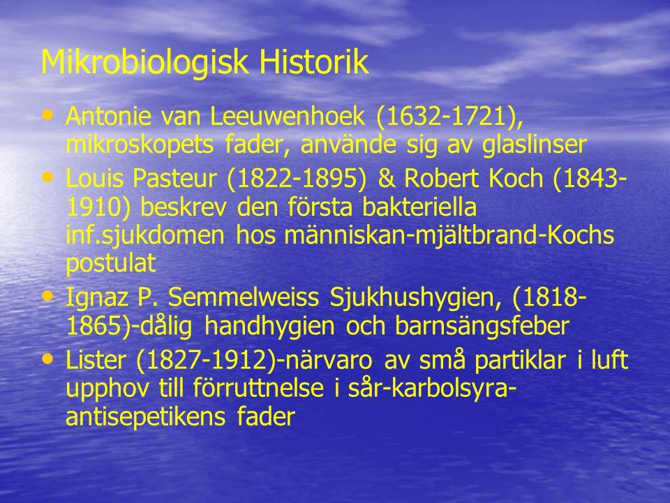 Mikrobiologisk Historik Antonie van Leeuwenhoek (1632-1721), mikroskopets fader, använde sig av glaslinser Louis Pasteur (1822-1895) & Robert Koch (1843- 1910) beskrev den första bakteriella inf.sjukdomen hos människan-mjältbrand-Kochs postulat Ignaz P.