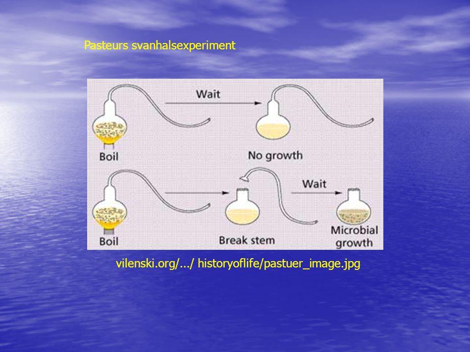 vilenski.org/.../ historyoflife/pastuer_image.jpg Pasteurs svanhalsexperiment