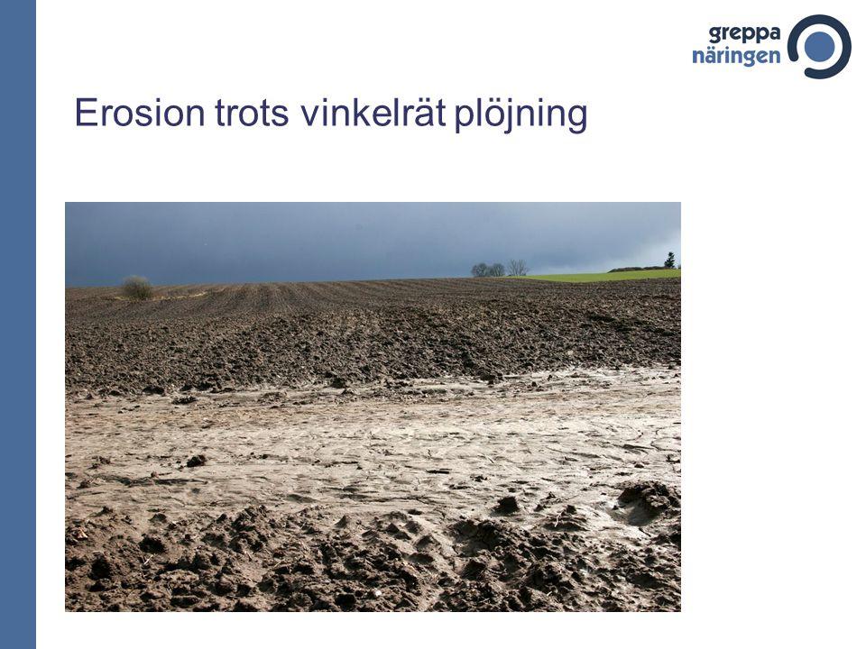 Erosion trots vinkelrät plöjning