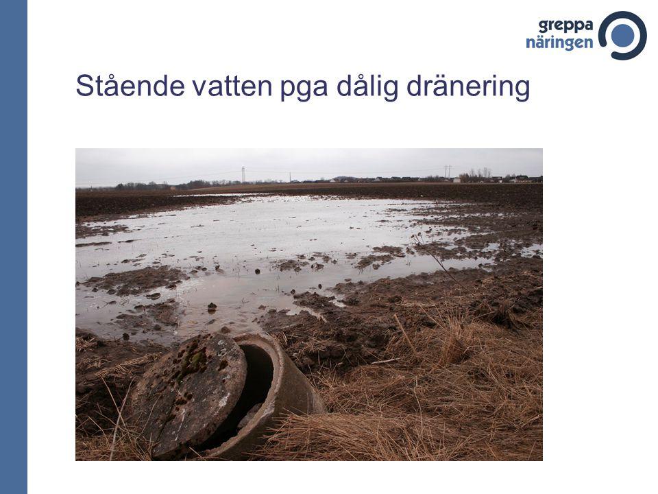 Stående vatten pga dålig dränering
