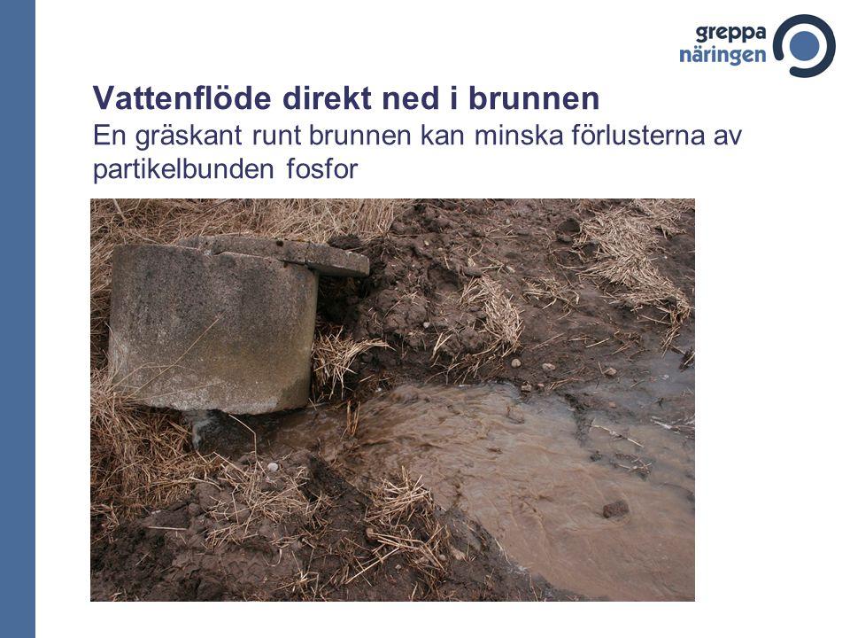 Vattenflöde direkt ned i brunnen En gräskant runt brunnen kan minska förlusterna av partikelbunden fosfor