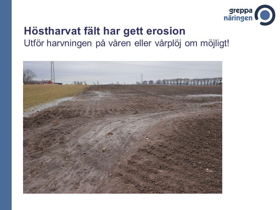 Höstharvat fält har gett erosion Utför harvningen på våren eller vårplöj om möjligt!