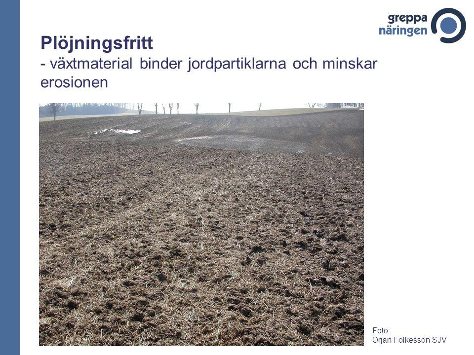 Plöjningsfritt - växtmaterial binder jordpartiklarna och minskar erosionen Foto: Örjan Folkesson SJV