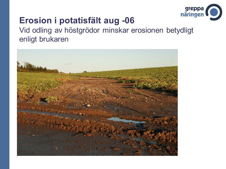 Erosion i potatisfält aug -06 Vid odling av höstgrödor minskar erosionen betydligt enligt brukaren