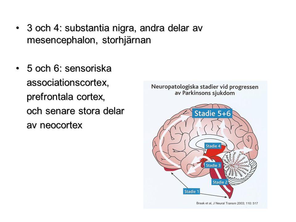 3 och 4: substantia nigra, andra delar av mesencephalon, storhjärnan3 och 4: substantia nigra, andra delar av mesencephalon, storhjärnan 5 och 6: sens