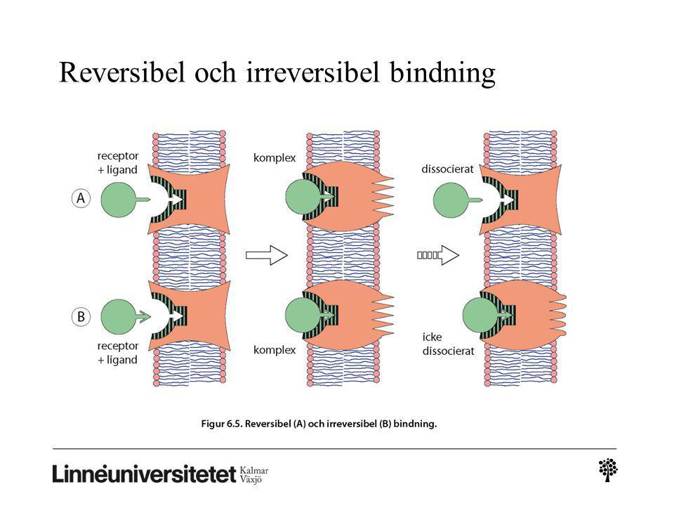 Reversibel och irreversibel bindning