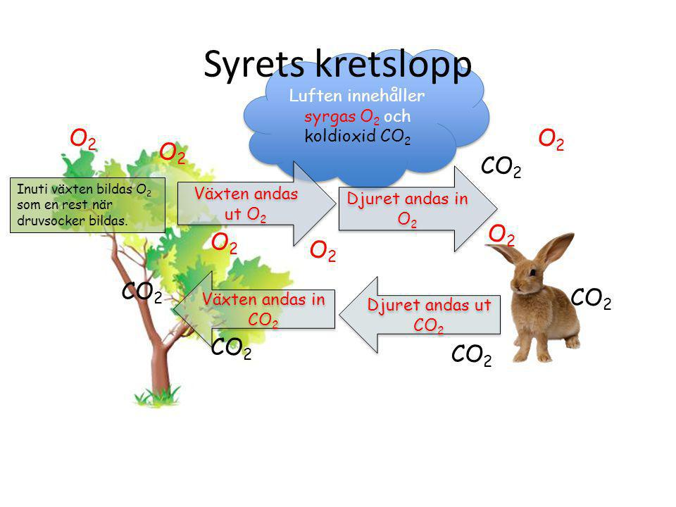 Kolets kretslopp om det blir fel… De flesta forskare anser att med för mycket koldioxid ökar jordens medeltemperatur och det leder till att bla glaciä