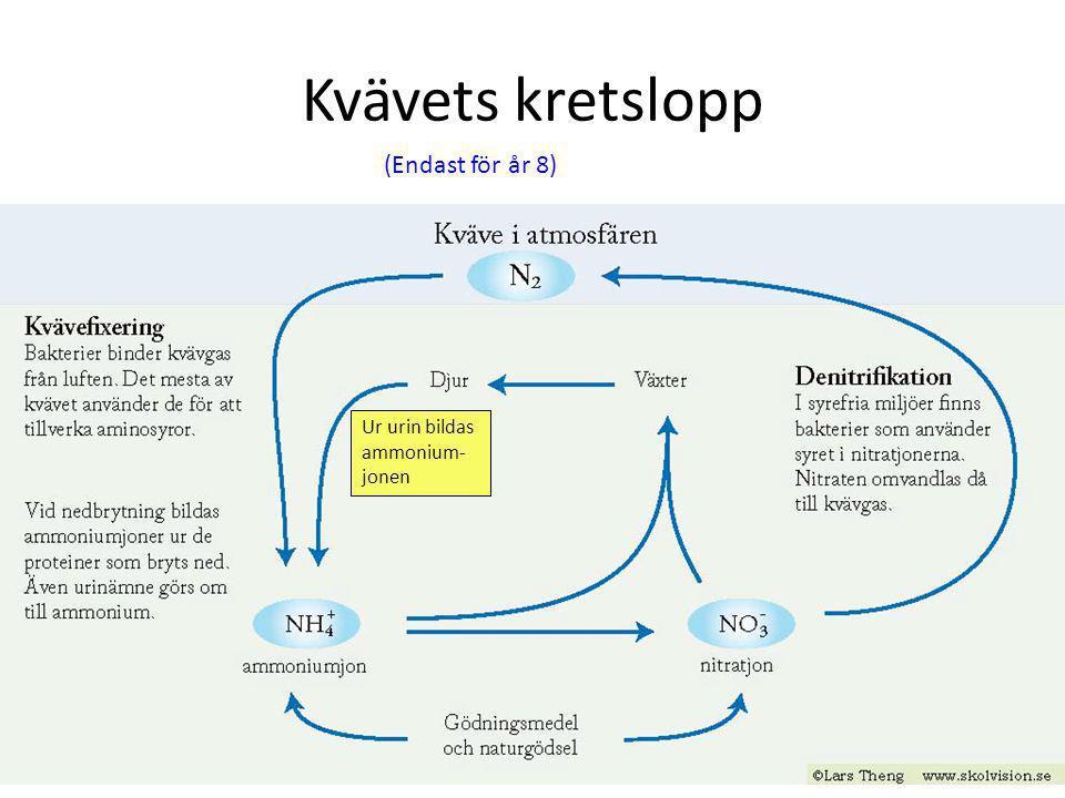 Luften innehåller syrgas O 2 och koldioxid CO 2 Syrets kretslopp CO 2 O2O2 O2O2 O2O2 O2O2 O2O2 Inuti växten bildas O 2 som en rest när druvsocker bild