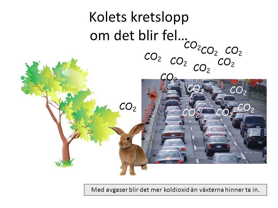 Kolets kretslopp Luften innehåller syrgas O 2 och koldioxid CO 2 CO 2 O2O2 O2O2 O2O2 O2O2 O2O2 Växten andas in CO 2 CO 2 O2O2 I marken finns det vatte