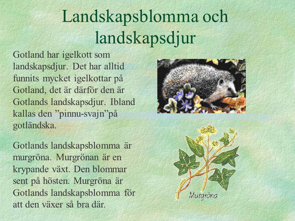 Landskapsblomma och landskapsdjur Gotland har igelkott som landskapsdjur.
