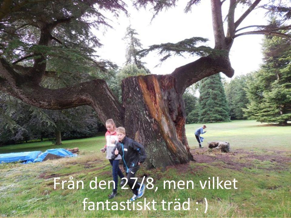 Från den 27/8, men vilket fantastiskt träd : )
