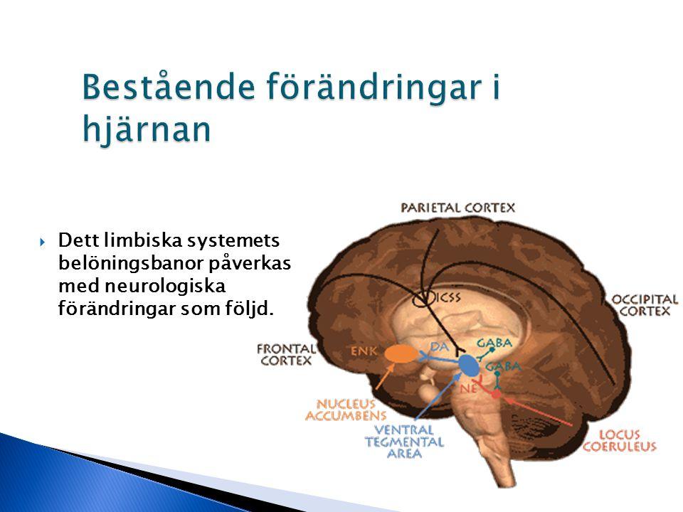  Dett limbiska systemets belöningsbanor påverkas med neurologiska förändringar som följd.