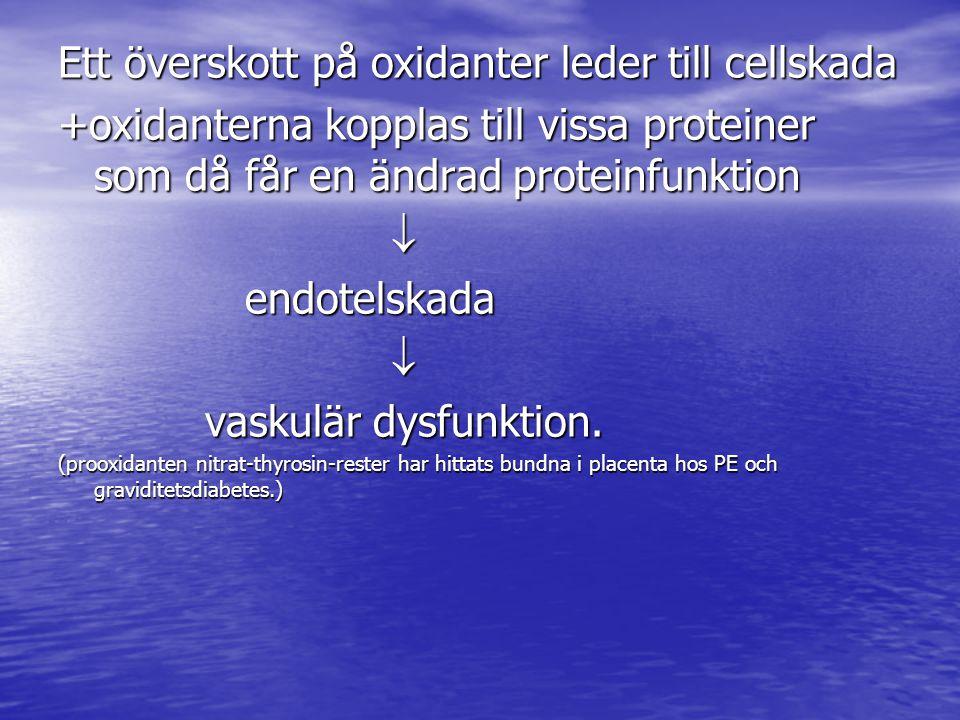 Ett överskott på oxidanter leder till cellskada +oxidanterna kopplas till vissa proteiner som då får en ändrad proteinfunktion  endotelskada endotelskada  vaskulär dysfunktion.