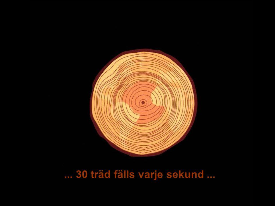 MEDVERKAN AV ALLMÄNHETEN www.transportlearning.net... 30 träd fälls varje sekund...
