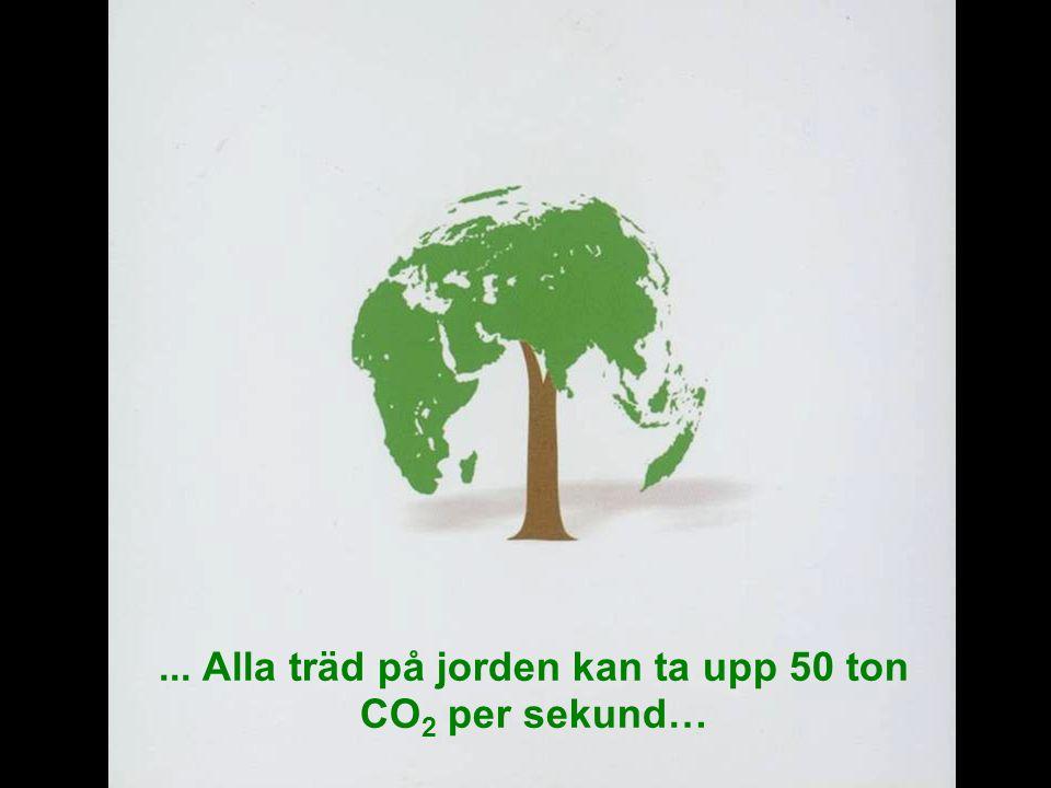 MEDVERKAN AV ALLMÄNHETEN www.transportlearning.net... Alla träd på jorden kan ta upp 50 ton CO 2 per sekund…