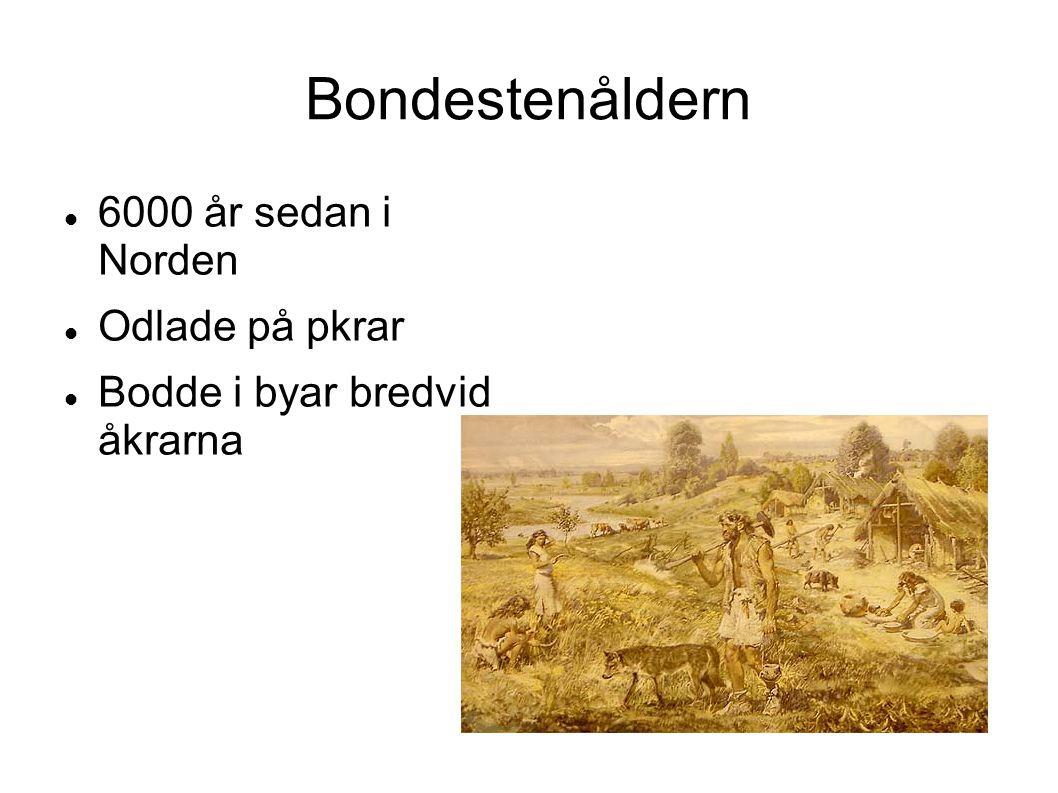 Bondestenåldern 6000 år sedan i Norden Odlade på pkrar Bodde i byar bredvid åkrarna