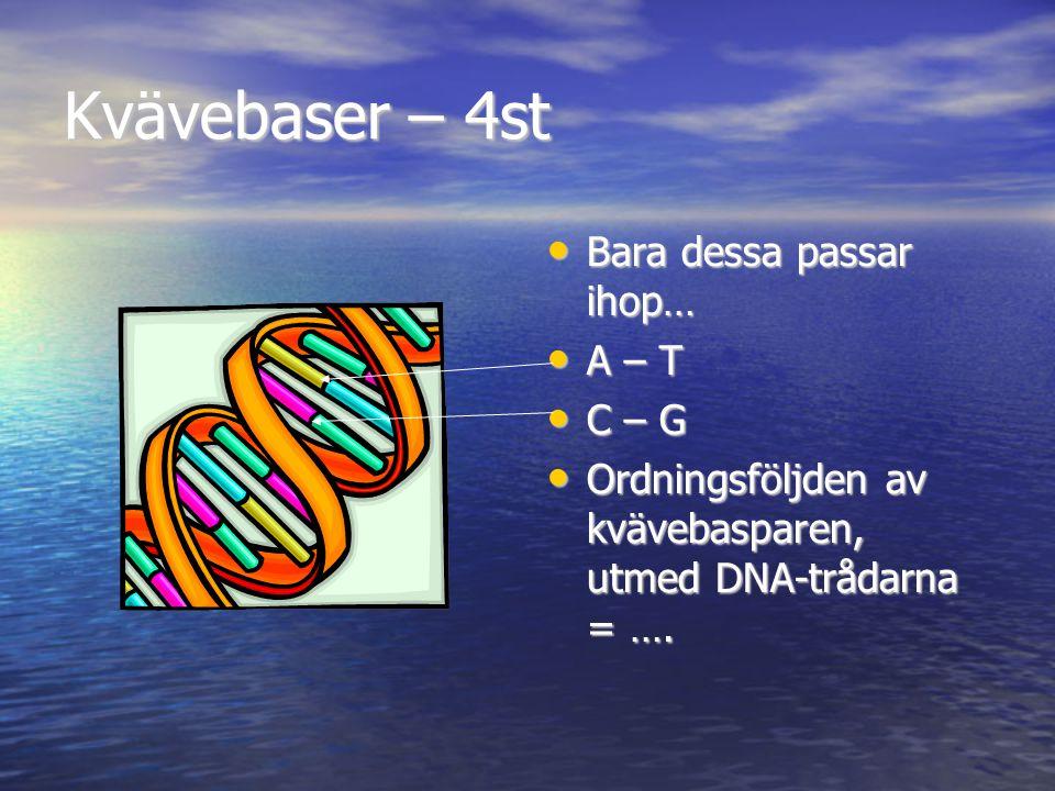 Kvävebaser – 4st Bara dessa passar ihop… Bara dessa passar ihop… A – T A – T C – G C – G Ordningsföljden av kvävebasparen, utmed DNA-trådarna = …. Ord