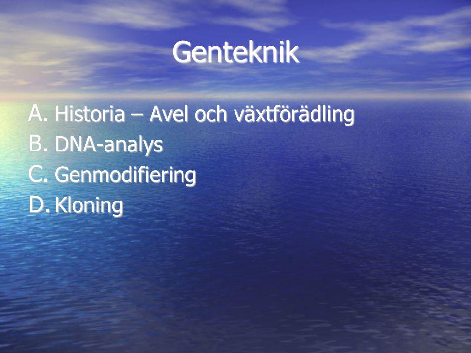 Genteknik A. Historia – Avel och växtförädling B. DNA-analys C. Genmodifiering D. Kloning