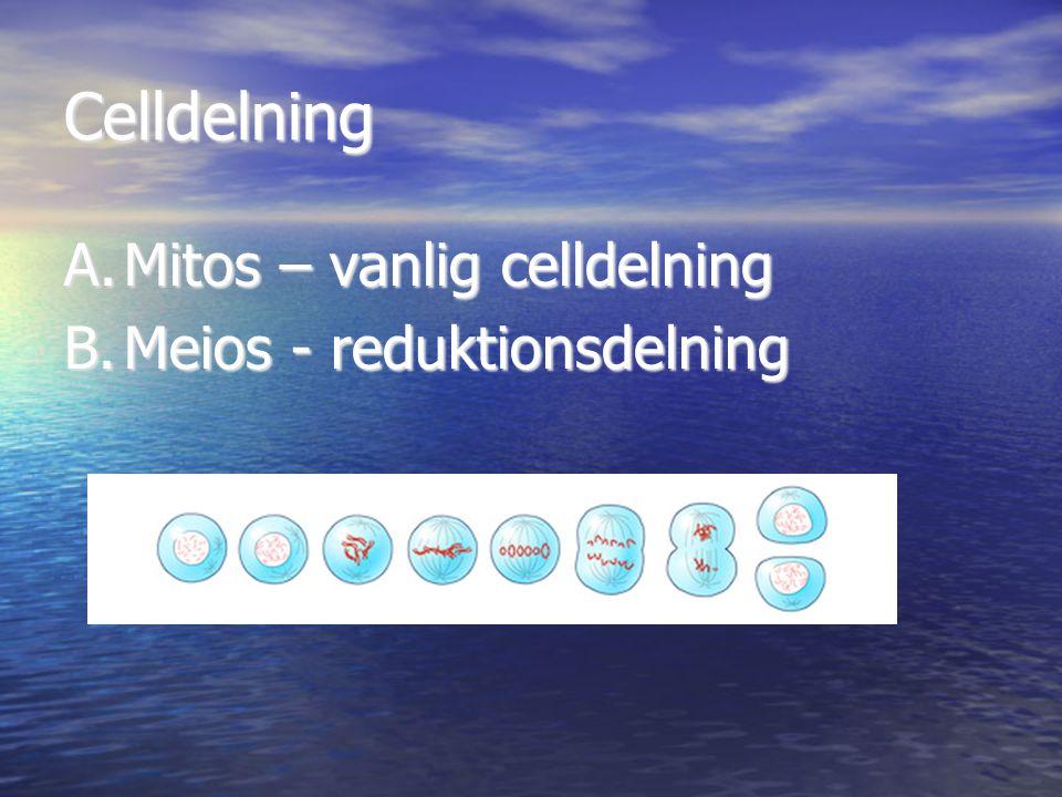 Celldelning A.Mitos – vanlig celldelning B.Meios - reduktionsdelning