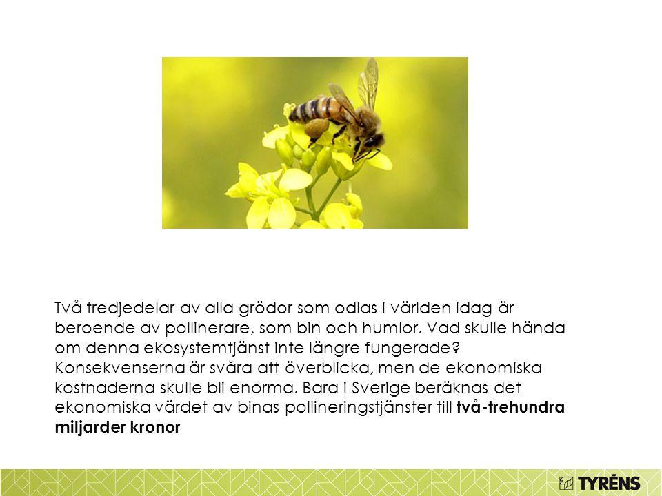 Två tredjedelar av alla grödor som odlas i världen idag är beroende av pollinerare, som bin och humlor. Vad skulle hända om denna ekosystemtjänst inte