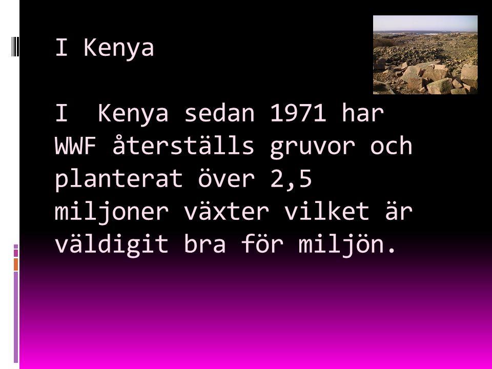 I Kenya I Kenya sedan 1971 har WWF återställs gruvor och planterat över 2,5 miljoner växter vilket är väldigit bra för miljön.