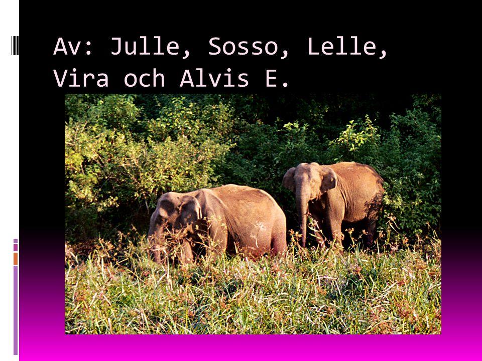 Av: Julle, Sosso, Lelle, Vira och Alvis E.