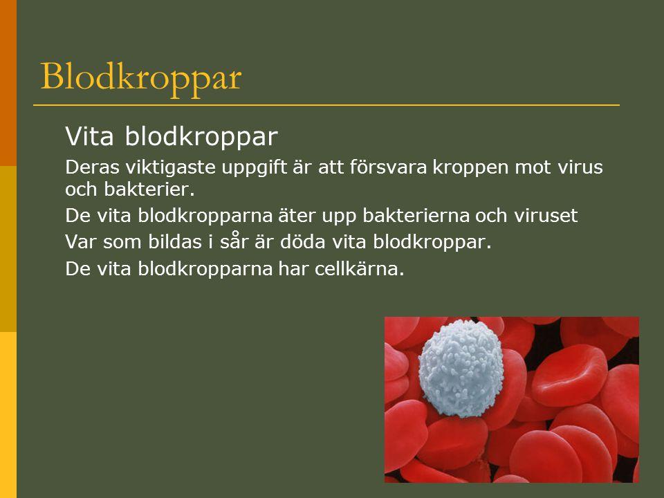 Blodplättarna (trombocyter) Små färglösa skivor.De är de minsta av blodkropparna.