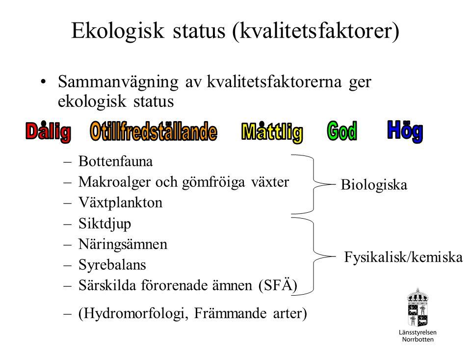 Ekologisk status (kvalitetsfaktorer) Sammanvägning av kvalitetsfaktorerna ger ekologisk status –Bottenfauna –Makroalger och gömfröiga växter –Växtplan