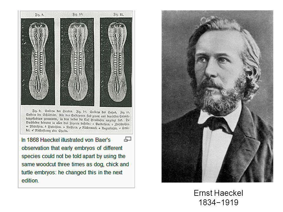 Ernst Haeckel 1834−1919