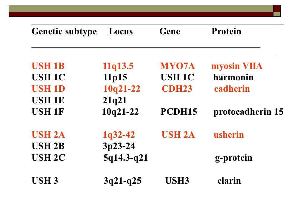 _____________________________________________________ Genetic subtype Locus Gene Protein ________________________________________________ USH 1B 11q13