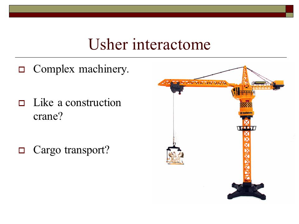 Usher interactome  Complex machinery.  Like a construction crane?  Cargo transport?